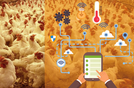 Custom Iot Solutions For Poultry Farms Smart Farming